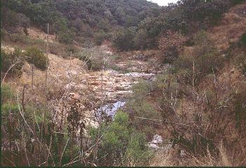 Arroyo Diabolos, Jalisco. Photo by Ivan Dibble 2000