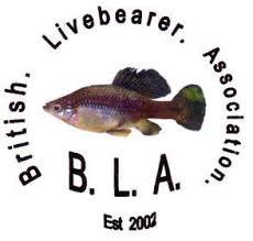 British Livebearer Association - Home   Facebook